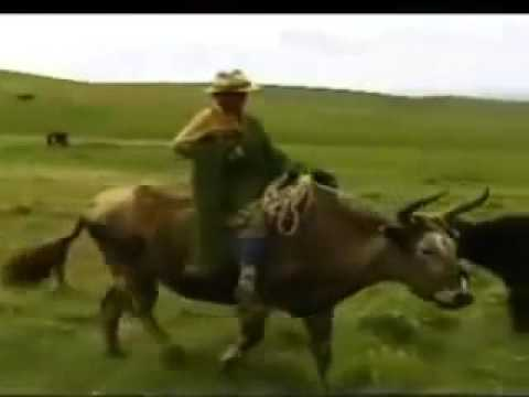 Unreached Peoples: China's Minority Groups #2 The Amdo Tibetans